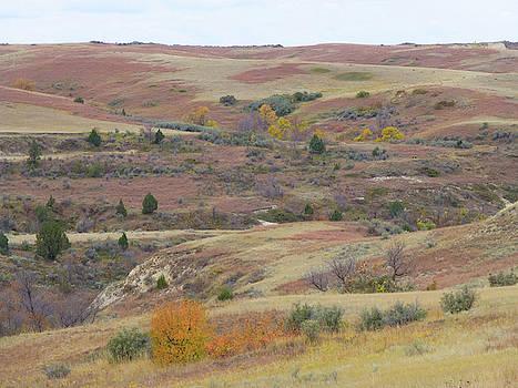 Autumn Grassland Glory by Cris Fulton