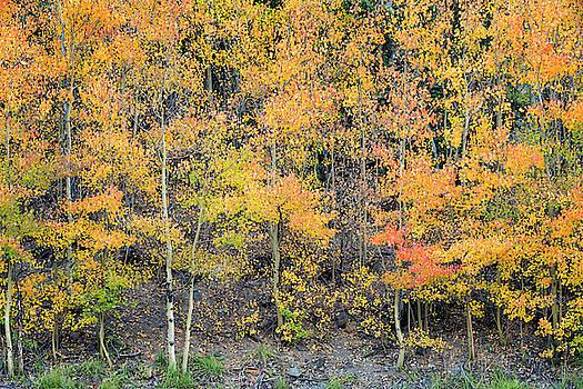 Autumn Hues by Denise Bush