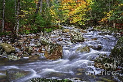 Autumn in NH by Sharon Seaward