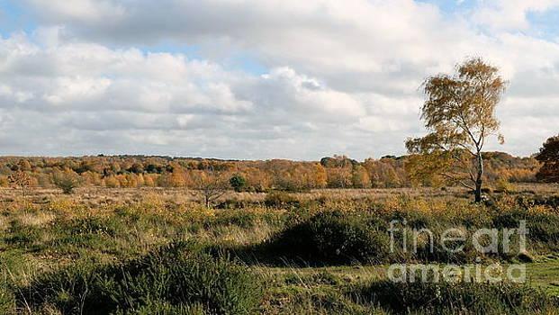 Autumn In Sutton Park 3 by John Chatterley