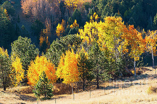 Autumn in the Pike National Forest by Steve Krull