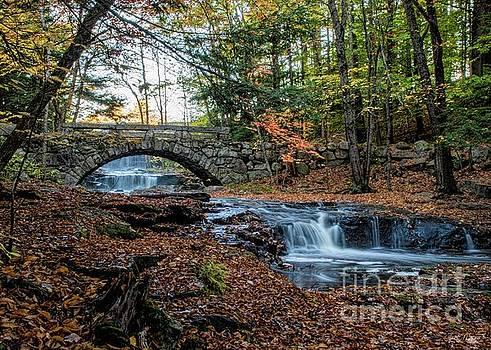 Autumn in Vaughn Woods by Jan Mulherin