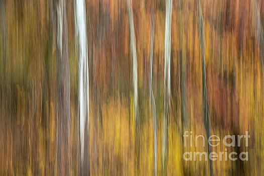 Autumn  by Joe Sparks