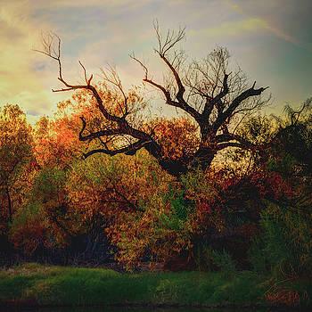 Autumn  by Ken Mickel
