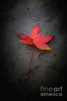 Autumn Leaf by Joe Sparks