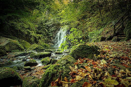 Autumn Leaves at Glenoe II by Alan Campbell