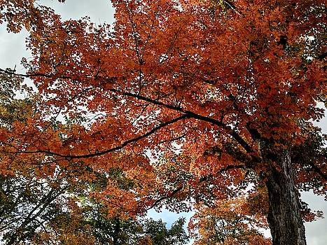 Autumn Leaves at Maplewood Cemetery by Julie Harrington