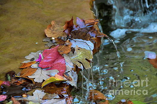 Autumn Leaves by Diana Mary Sharpton