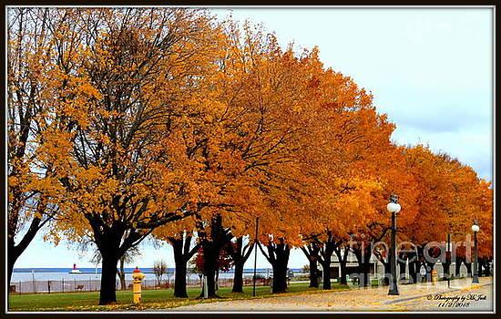 Ms Judi - Autumn leaves in Menominee Michigan