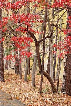 Kathleen K Parker - Autumn Leaves