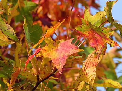 Autumn Leaves by Mandy Byrd