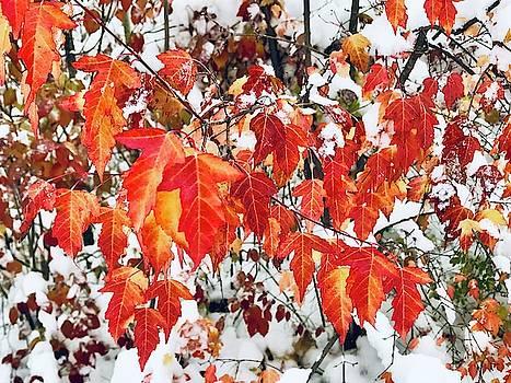 Autumn Leaves  by Shirley Kurian