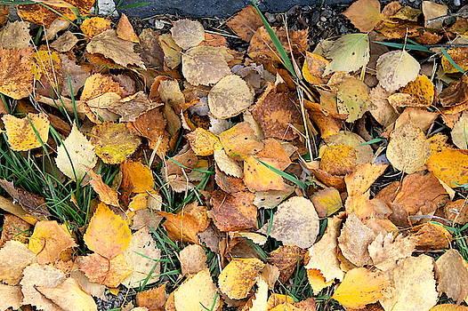 Autumn light by Inessa Williams