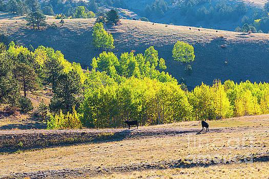 Autumn on the Cattle Range by Steve Krull
