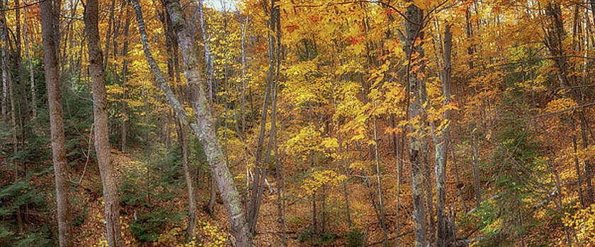 Susan Rissi Tregoning - Autumn Panorama