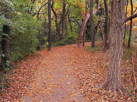 Autumn Pathway by Stacey Wells