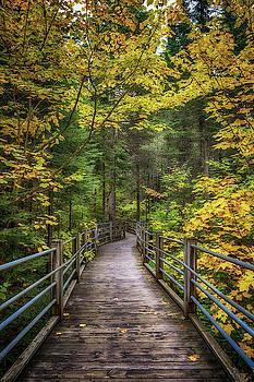 Susan Rissi Tregoning - Autumn Pathway