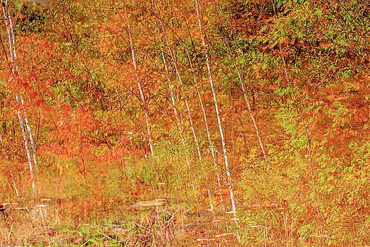 Gary Hall - Autumn Pond Reflection