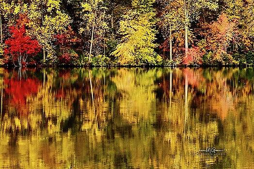 Autumn Reflection by Shawn M Greener