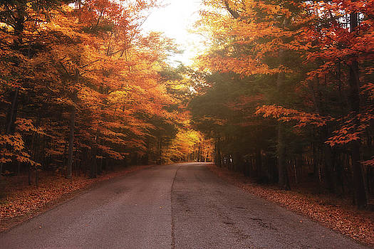 Autumn road by Angela King-Jones
