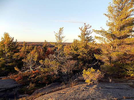 Autumn Rock Trees by Susan Janus