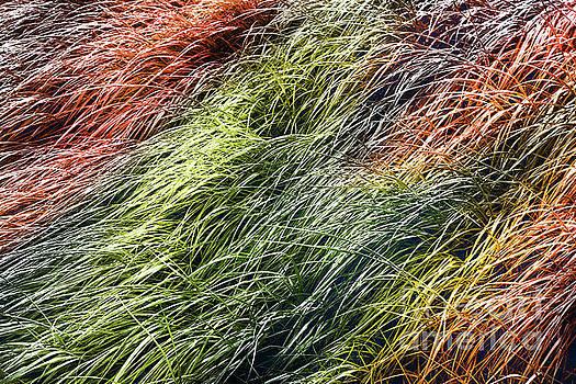 Autumn Shades of Grass  by Margaret Koc