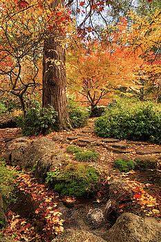 Autumn Stream In Lithia Park by James Eddy