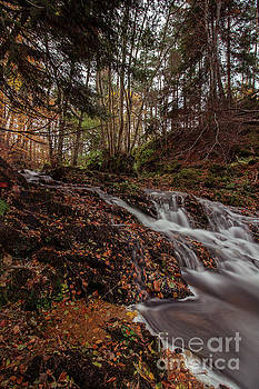 Autumn Taking Hold on the Dess Burn by SJ Elliott Photography