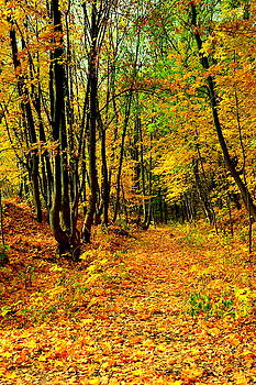 Henryk Gorecki - Autumn trail