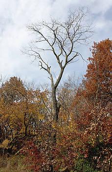 Autumn Tree by Ellen Tully