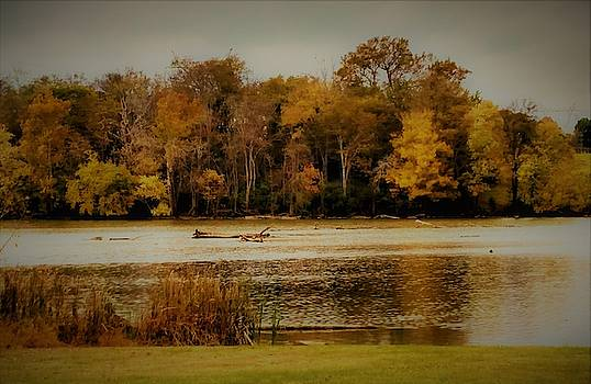 Autumn Trees and Old Hickory Lake by Peggy Leyva Conley