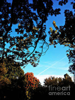 Frank J Casella - Autumn Trees Blue Sky
