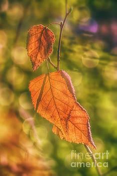 Autumn by Veikko Suikkanen