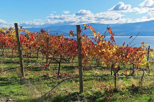 Autumn Vineyard 1 by Allan Van Gasbeck