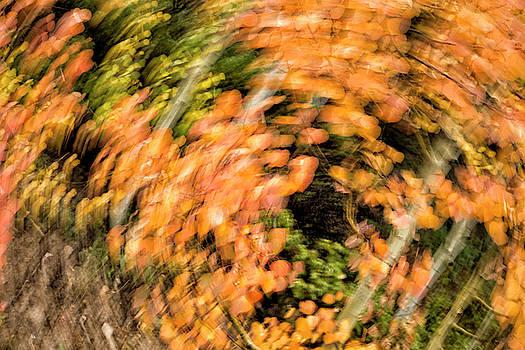 Autumn Vortex by Denise Bush