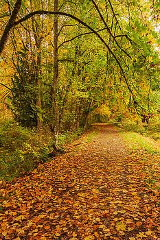 Autumn Walk by Bob Cournoyer