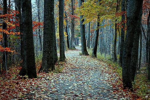 Autumn Way by John Meader