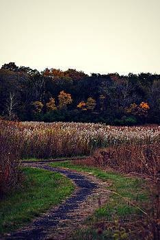 Frank J Casella - Autumn Wetlands