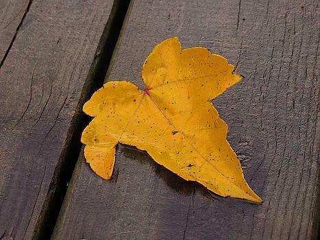 Autumn Yellow by Mandy Byrd
