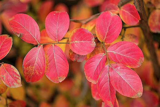 Autumnal hues by Vanessa Thomas