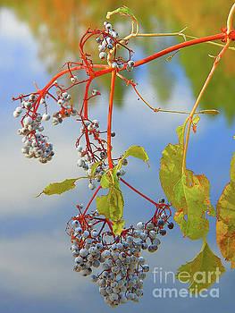 Autumns Elderberry On The Edge Of A River by Art Sandi