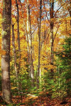 Susan Rissi Tregoning - Autumn