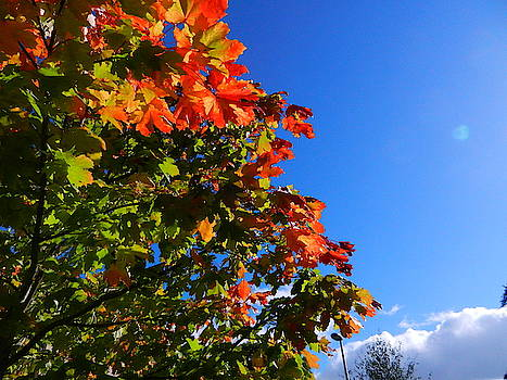 Autumn's Here at Last by Nik Watt