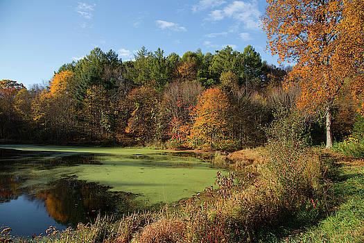 Autumns Pond by Karol Livote