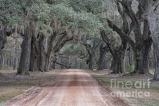 Avenue of Oaks by Dale Powell