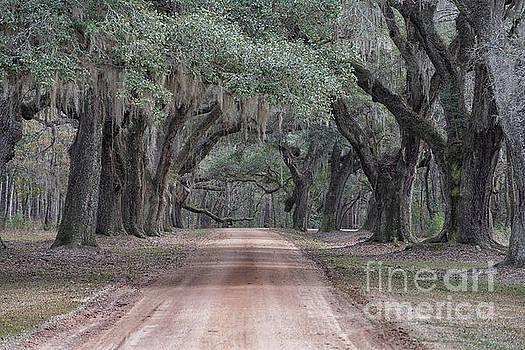 Dale Powell - Avenue of Oaks
