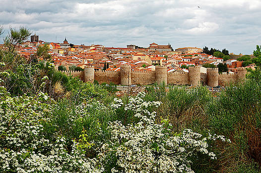 Avila Spain and Flowers by Sally Weigand