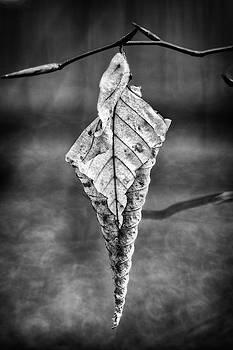 Awaits the Wind by Scott Wyatt
