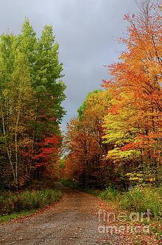 Awesome Autumn Day by Sandra Updyke
