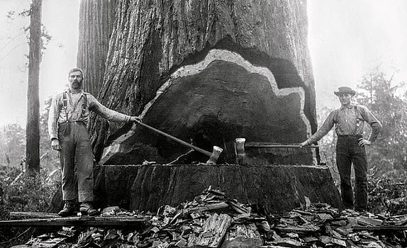 Daniel Hagerman - AX MEN TACKLING a GIANT SEQUOIA c. 1878